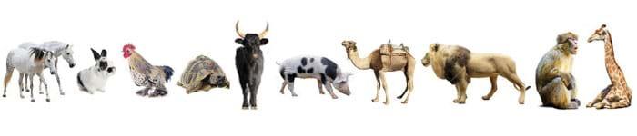 MEX Memory Test Animals